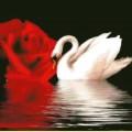 """Набор алмазной вышивки АЛМАЗНАЯ ЖИВОПИСЬ  """"Белый лебедь"""""""