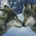 """Набор алмазной вышивки АЛМАЗНАЯ ЖИВОПИСЬ """"Волчий поцелуй"""""""