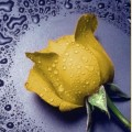 """Набор алмазной вышивки АЛМАЗНАЯ ЖИВОПИСЬ """"Желтая  роза"""""""
