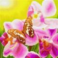 """Набор алмазной живописи ИМПЕРИЯ БИСЕРА """"Бабочка и орхидея"""""""