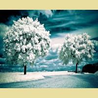 """Набор алмазной живописи ИМПЕРИЯ БИСЕРА """"Белое дерево"""""""