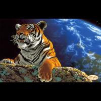 "Схема для вышивания бисером ТЭЛА АРТИС ""Амурский тигр. Спасем планету"""