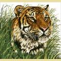 """Набор алмазной вышивки АЛМАЗНАЯ ЖИВОПИСЬ """"Уссурийский тигр"""""""