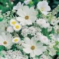 """Набор алмазной вышивки  АЛМАЗНАЯ ЖИВОПИСЬ """"Белые полевые цветы"""""""