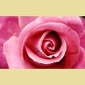 """Набор алмазной вышивки АЛМАЗНАЯ ЖИВОПИСЬ """"Бутон розы"""""""