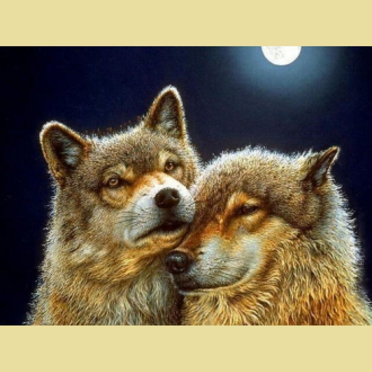 Алмазная вышивка волк и волчица