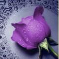 """Набор алмазной вышивки АЛМАЗНАЯ ЖИВОПИСЬ """"Фиолетовая роза"""""""