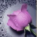 """Набор алмазной вышивки АЛМАЗНАЯ ЖИВОПИСЬ """"Розовая роза"""""""