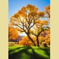 """Набор алмазной вышивки АЛМАЗНАЯ ЖИВОПИСЬ """"Осеннее дерево"""""""