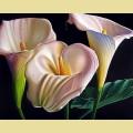 Набор алмазной вышивки АЛМАЗНАЯ ЖИВОПИСЬ «Прекрасные каллы»