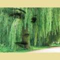 """Набор алмазной живописи АЛМАЗНАЯ ВЫШИВКА на подрамнике """"Образ ивы"""""""