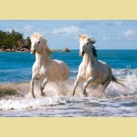 """Пазлы КАСТОР """"Белые лошади"""""""