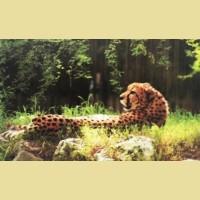 """Набор для вышивания бисером COLOR KIT """"Леопард"""""""