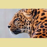 """Набор алмазной живописи ИМПЕРИЯ БИСЕРА """"Взгляд"""""""